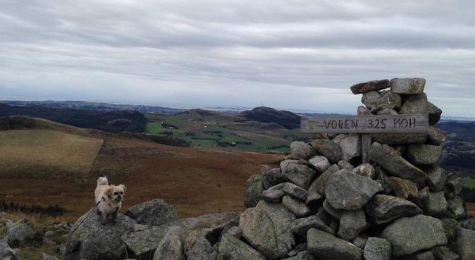 Søker turkamerat til fjellturer, hundepassere i Sandnes, Norway