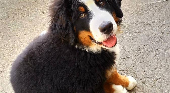 Promenades à gogo !, dog sitter à Chambéry