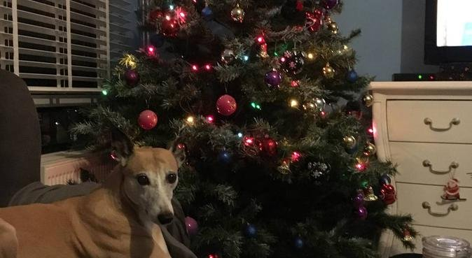 Liefdevol hondenoppas in amsterdam zuidoost, hondenoppas in Amsterdam