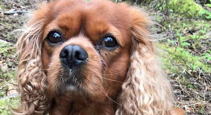 Livlig jente søker leken turkompis!, hundepassere i Hundvåg