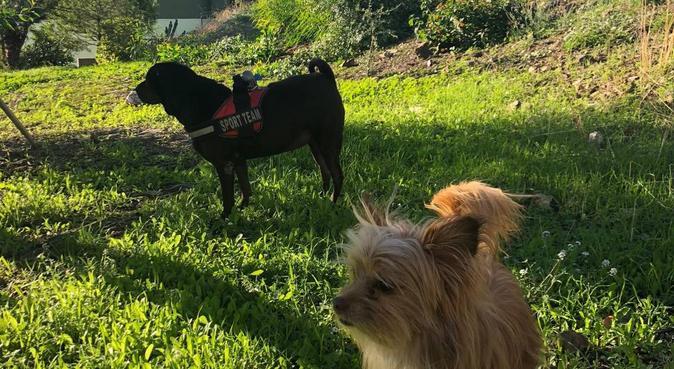 Tu mascota se sentirá una más de la familia 🐶🐱❤️🏠, canguro en Málaga