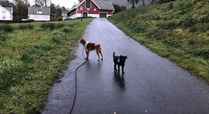 People who love animals are my favorite people, hundepassere i Øvre Ervik