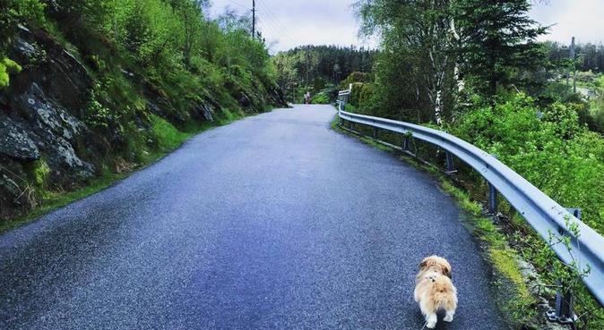 Uansett vær, så er turgleden alltid der!, hundepassere i Kolnes