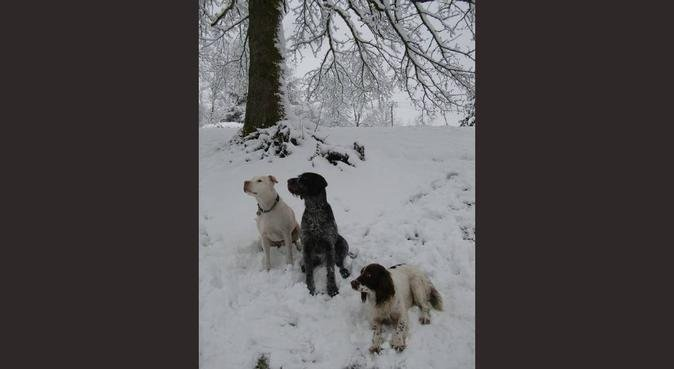 Dogs Home From Home, dog sitter in Cardiff