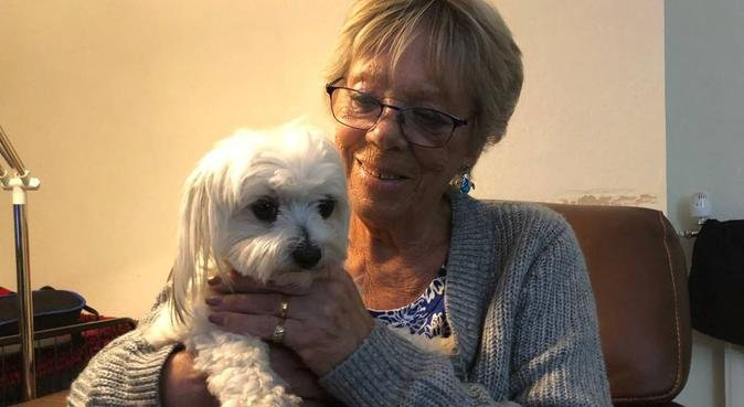 Experienced, caring dog sitter in Trowbridge, dog sitter in Trobridge