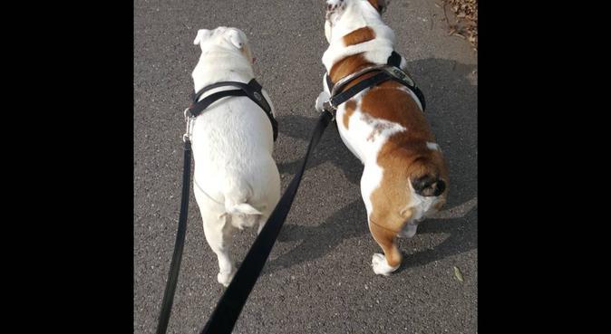 Coccole e passeggiate con i vostri pelosi, dog sitter a Firenze