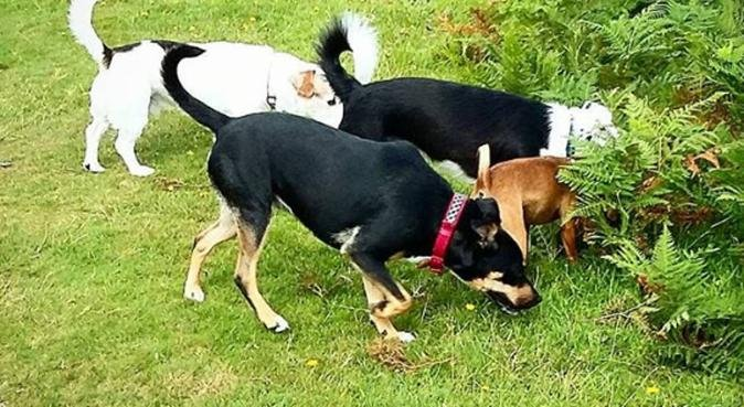 Loving And Enriching Dog walks in Plymouth, dog sitter in Plymouth