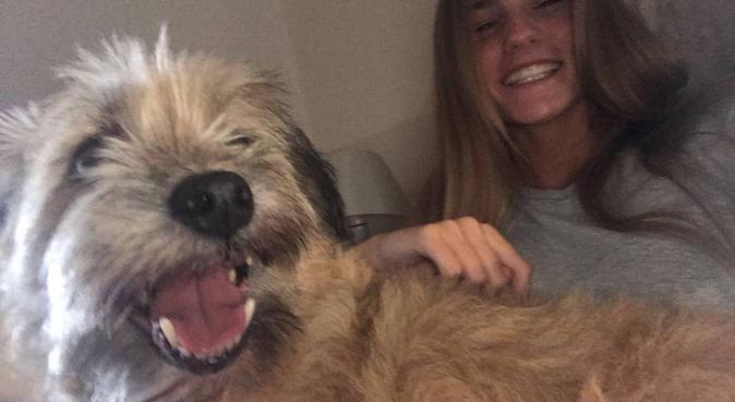 Dog walker who loves dogs, dog sitter in Hornchurch