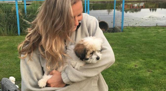 Opzoek naar een lieve hond om mee te wandelen, hondenoppas in Amsterdam