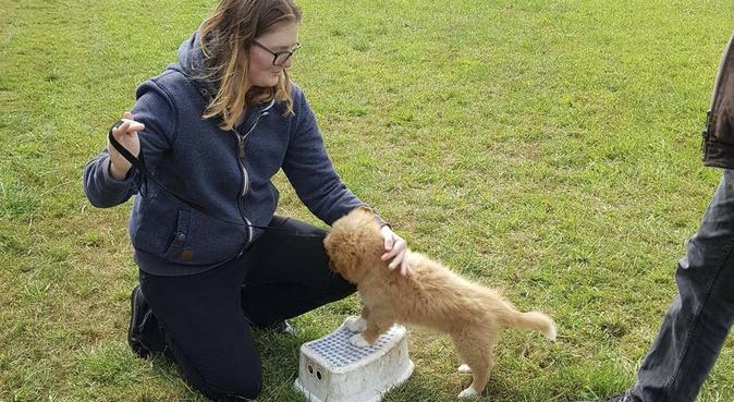 Liefdevolle hondenlief hebber, hondenoppas in Hoofddorp