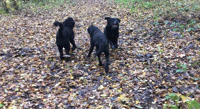 Hondenuitlaatservice voor groot en klein, hondenoppas in Eindhoven