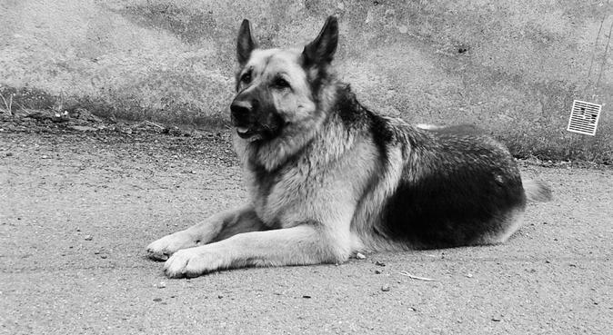 🐾Un endroit cosy pour vos petits amis 🐾, dog sitter à Les Ponts-de-Cé