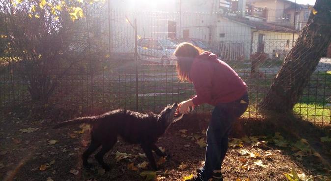 Lunghe passeggiate per gli amici a quattro zampe, dog sitter a Roma