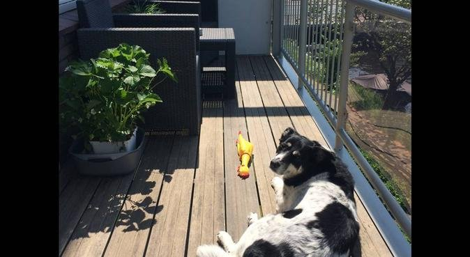 Liefdevol huis in Katwijk, hondenoppas in Katwijk Aan Zee