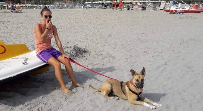 Passeggiate rilassanti e corsa per i vivaci!, dog sitter a Santarcangelo di Romagna