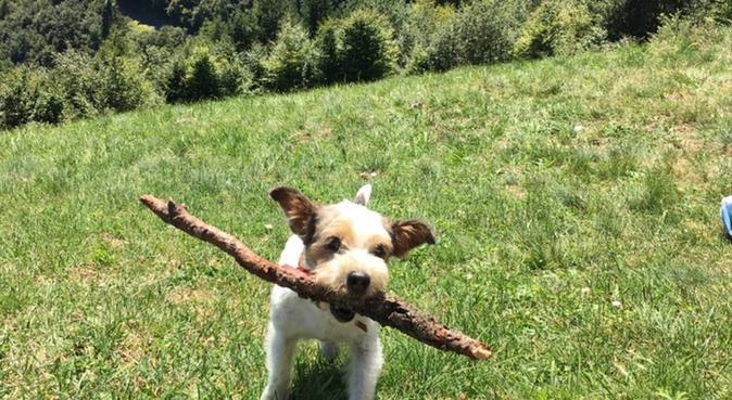 Coccole, giochi e passeggiate!, dog sitter a Padova