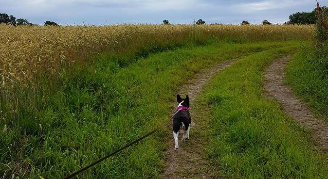 Lek og ha det gøy på tur med oss :), hundepassere i Moss