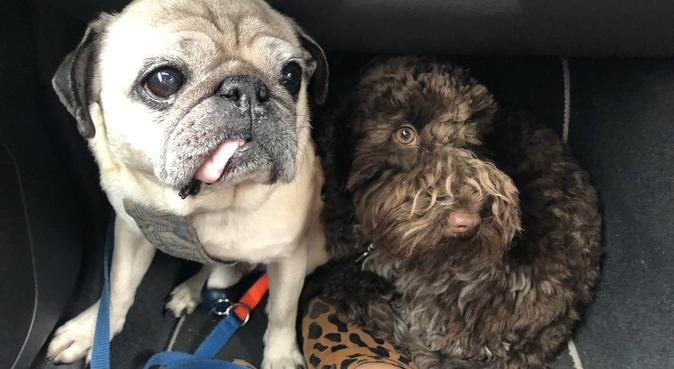 Hoxton Doggy Daycare, dog sitter à London