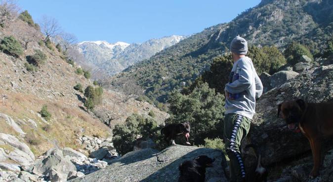 Hogar de pelos picos y patas, canguro en Madrid, España