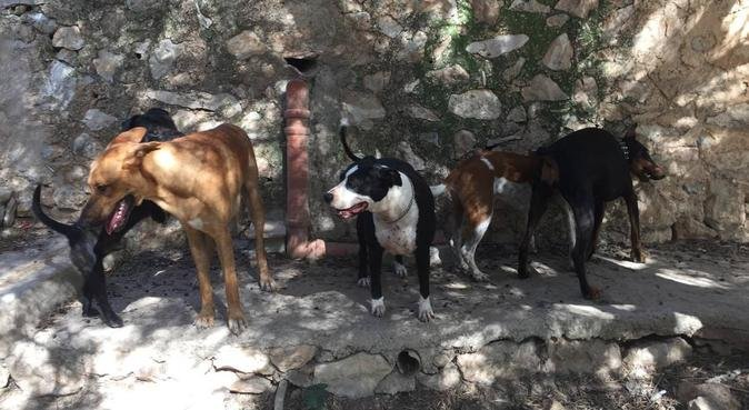 Cuido a tu mascota con el mejor cariño del mundo, dog sitter in Ibiza