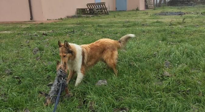migliore è la compagnia e maggiore è la felicità!!, dog sitter a Rimini