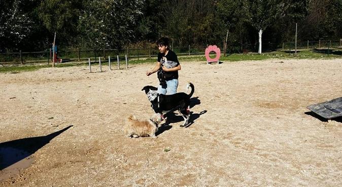 PASEOS LARGOS Y MILES MIMOS CON EVA Y YOYO, canguro en Madrid, España