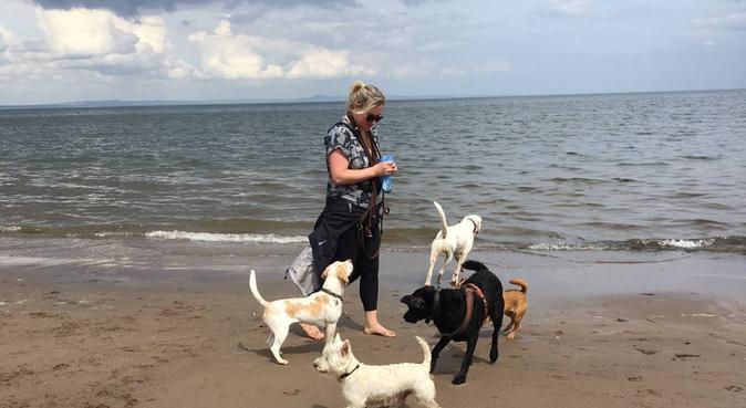 DogsGo4Walks, dog walking&day care-South Edinburgh, dog sitter in Edinburgh