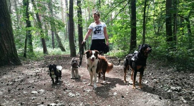 Dogwalker/Gassigeher im Süden Berlins, Hundesitter in Berlin