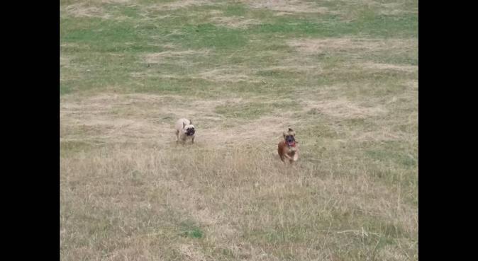Coccole e passeggiate piene d'amore <3, dog sitter a Roma