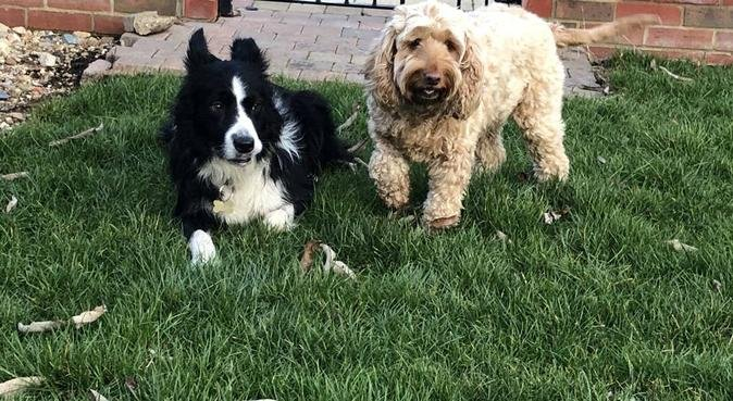Dog loving family, ready to care for your fur baby, dog sitter in Peterborough