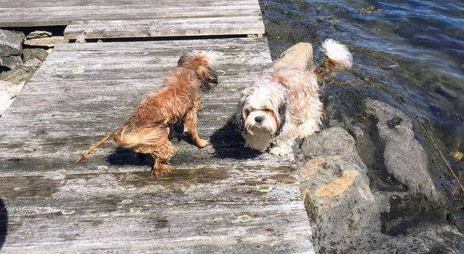 Kärleksfull hundpassning i Sundbyberg, hundvakt nära Sundbyberg