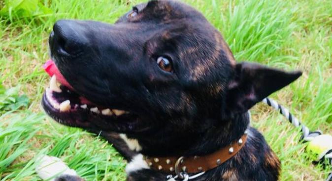 Hand N Hound Dog Walking & Pet Sitting In Derby., dog sitter in Derby