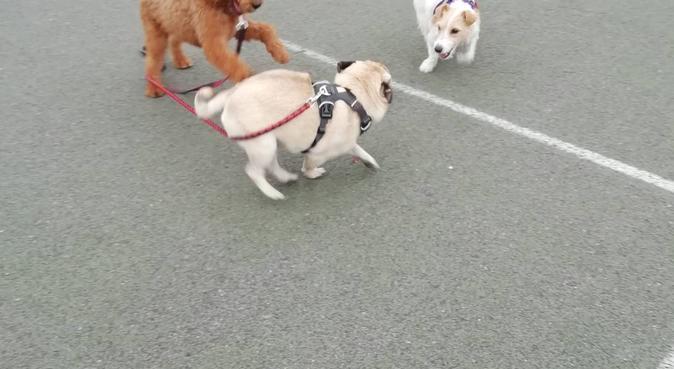 Manu Harrop Streatham Hill Dog Carer, dog sitter in London
