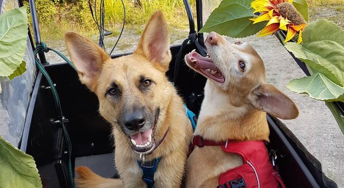 Trygg hundpassning, hundvakt nära Örsundsbro, Sverige