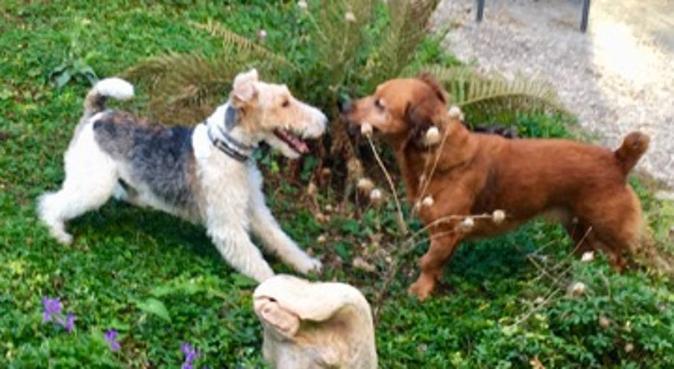 A la maison/jardin avec un copain et des câlins !, dog sitter à Gournay-sur-Marne