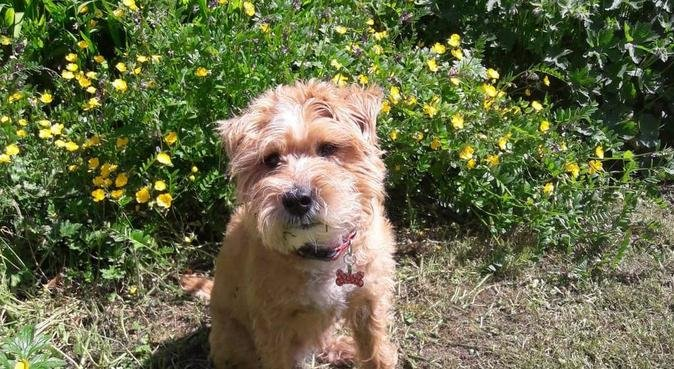 Walking and care in the Peak District, dog sitter in Buxton