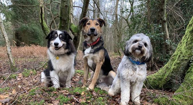 Dog heaven on earth in East Horsley, Surrey Hills, dog sitter in East Horsley