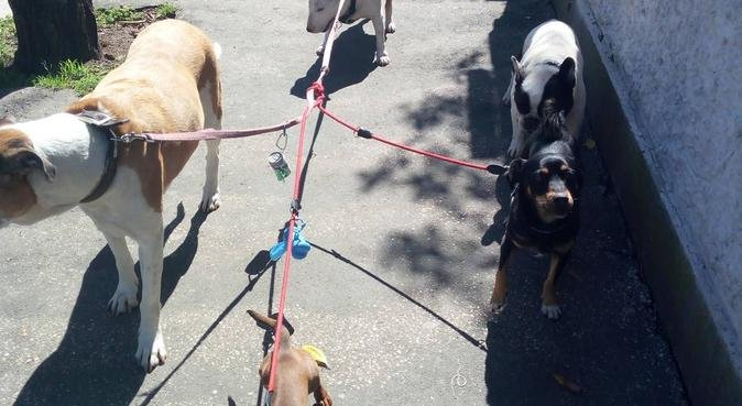 Divertimento assicurato e lunghe passeggiate, dog sitter a Roma