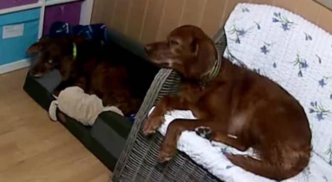 Hundeinstruktør utdannet hos Lundqvist hundeskole, hundepassere i Dal, Norge
