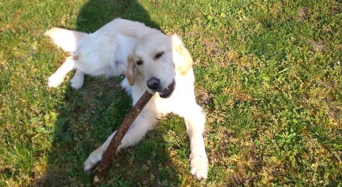 Un endroit paisible pour les animaux, dog sitter à Esvres-sur-Indre