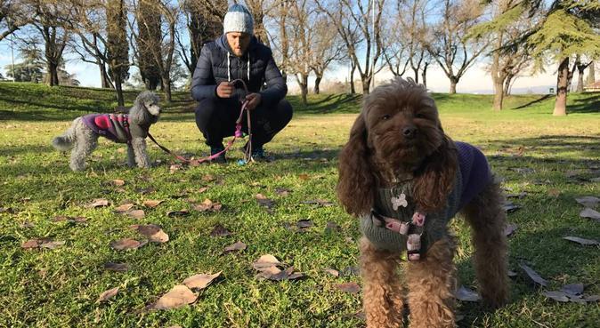 Divertimento ad almeno 6 zampe!, dog sitter a Roma
