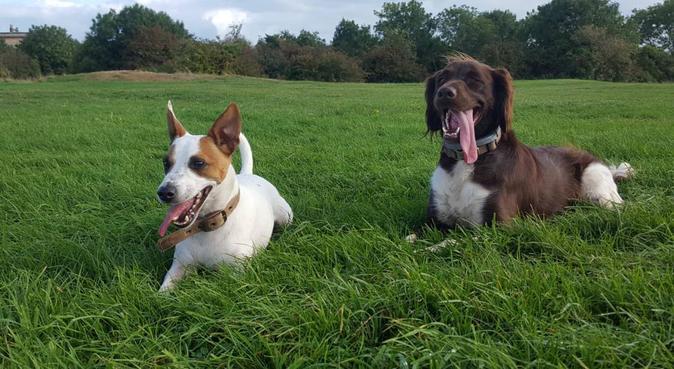 Experienced Dog Boarding in Bristol, dog sitter in Bristol