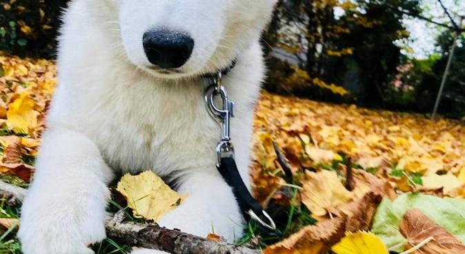 Mel toutous câlin, dog sitter à Annecy