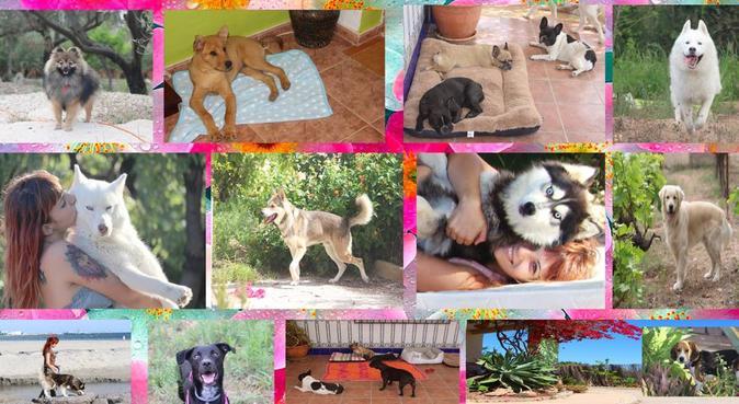 Vacaciones para tus perros! como en casa :D, canguro en Elche