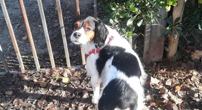 Dog sitting, passeggiate, gioco e coccole., dog sitter a Lastra a Signa