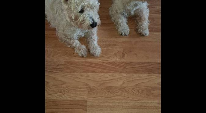 'Walkies' Day Care/Walking/Boarding, dog sitter in LIVERPOOL
