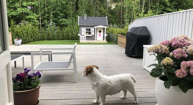 Bli kvitt dårlig samvittighet - la meg ta turen, hundepassere i Oslo