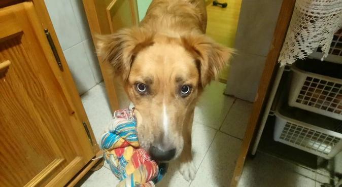 💙Segundo Hogar (Second Home) 💙, dog sitter in Madrid