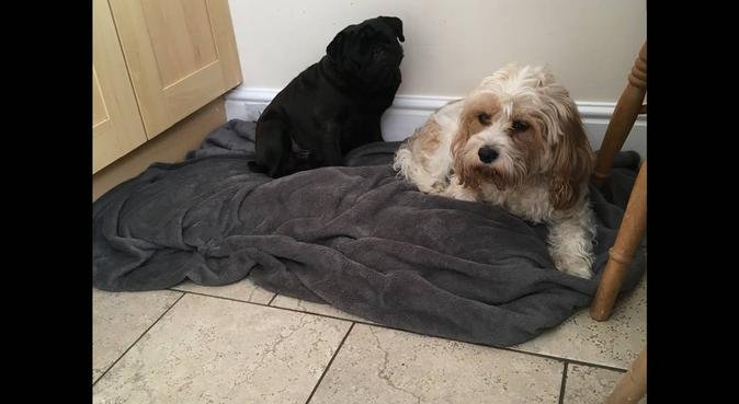 Holly's VIPet Care, dog sitter in Henley-on-Thames