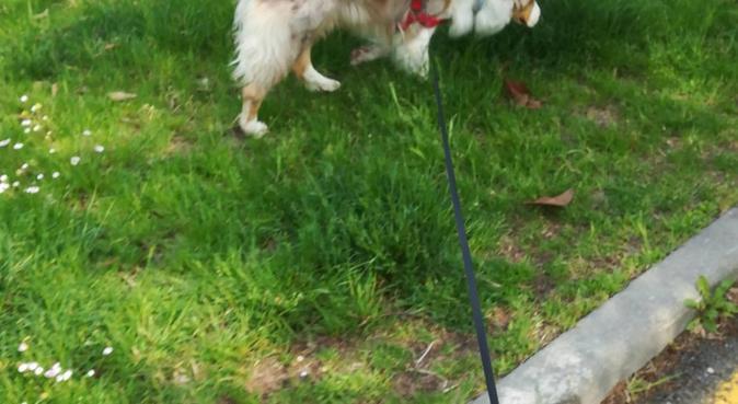 Vlad Dog Sitter per Formigine e Modena, dog sitter a Formigine